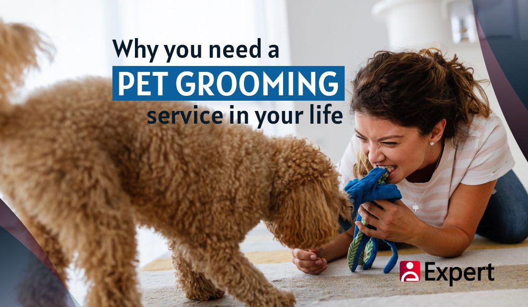 Why You Need a Pet Grooming Service in Your Life